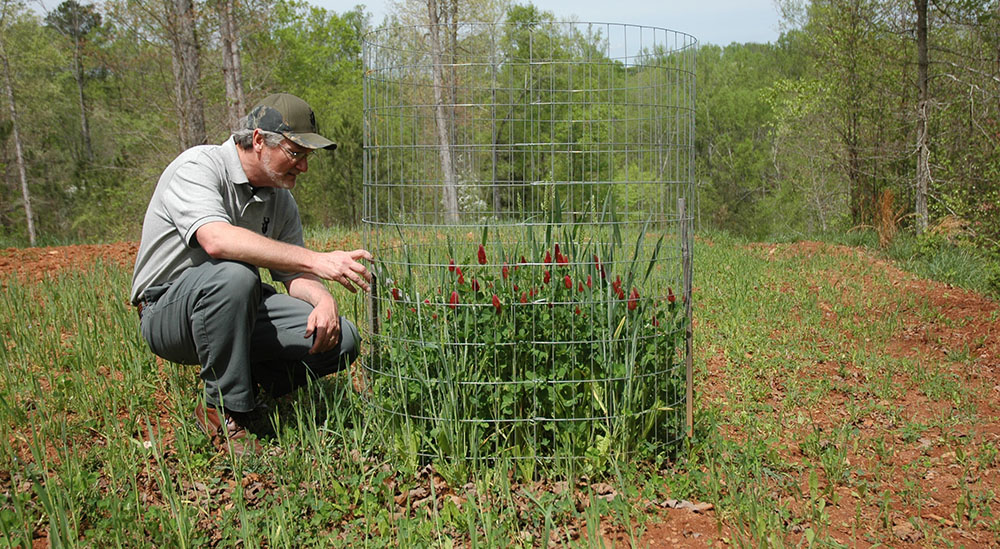 deer food plot browse exclosure