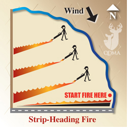 Strip_heading_fire