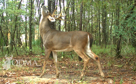 deer_research_574_354_s