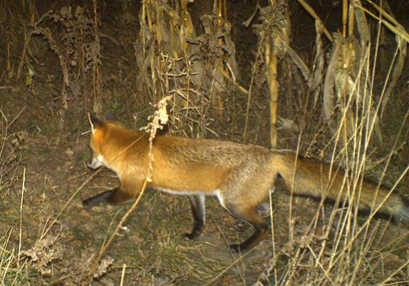 fox_lead_574_401_s