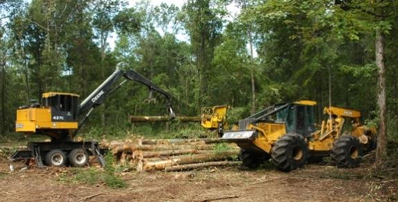logging_disturbance_deer_qdma_574_291_s