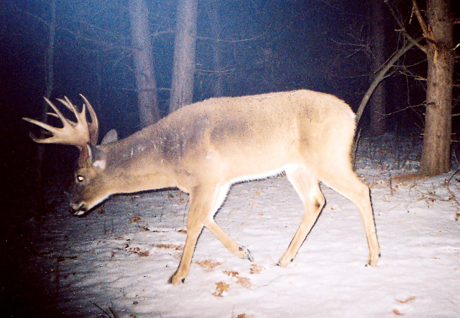 five_tips_for_photographing_mature_bucks__large
