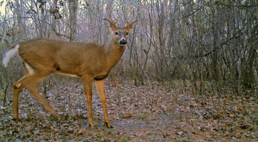 the_ideal_buck-aging_photo__large