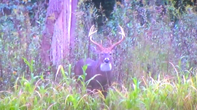 8 Tips for Beating Buck Fever photo three