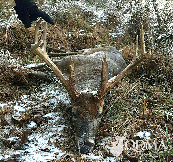 buck bottle qdma lead