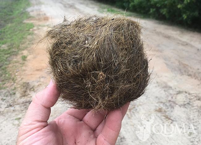 hog hair ball lead